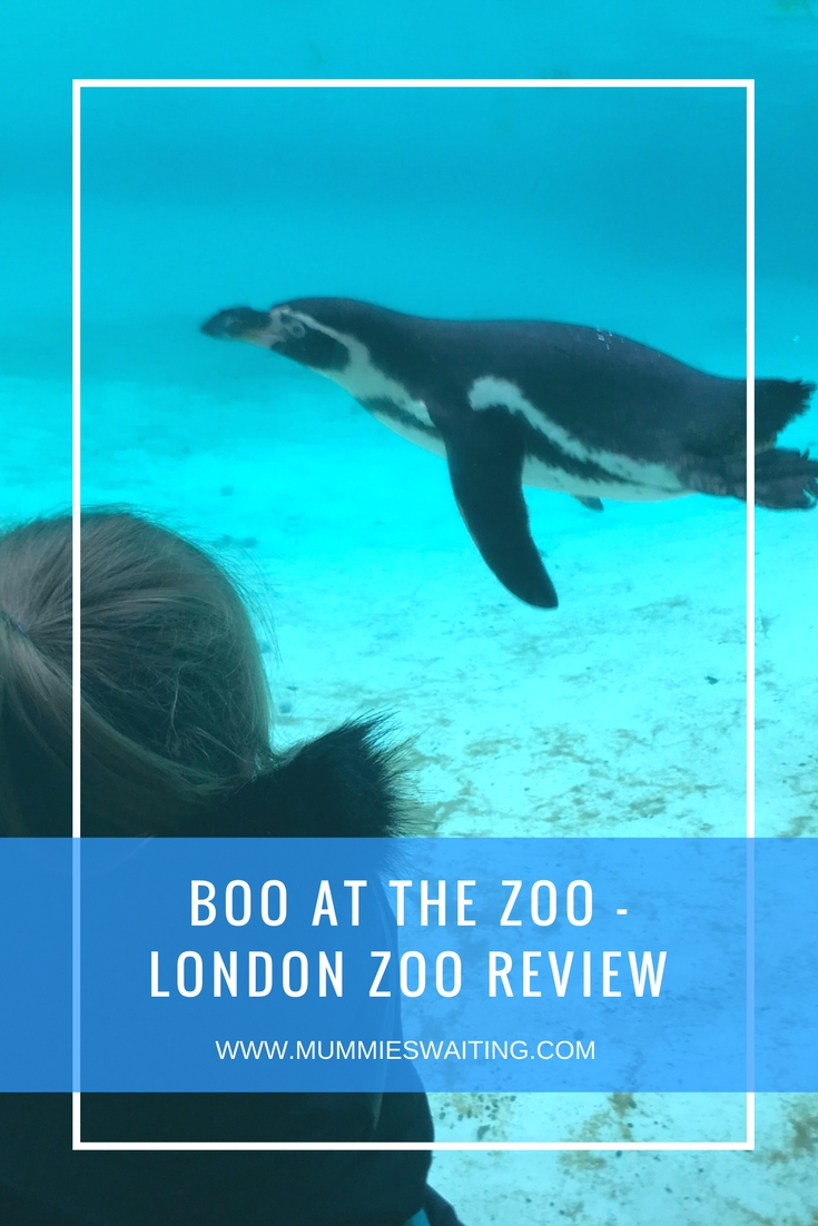 Boo At The Zoo - London Zoo Review