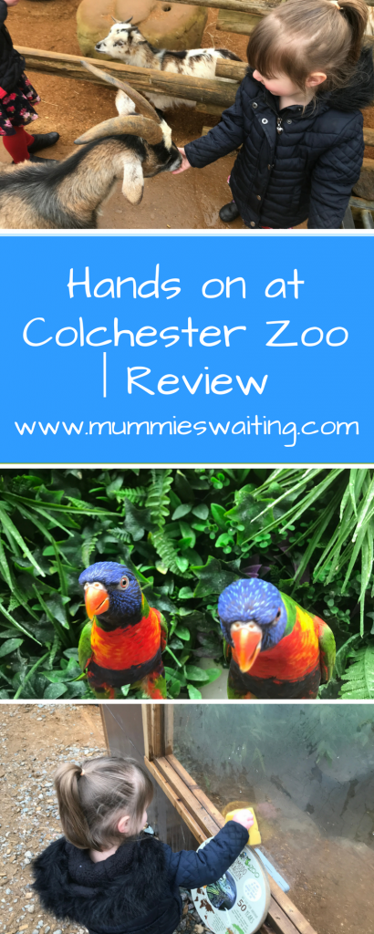 Hands on at Colchester Zoo | Review§
